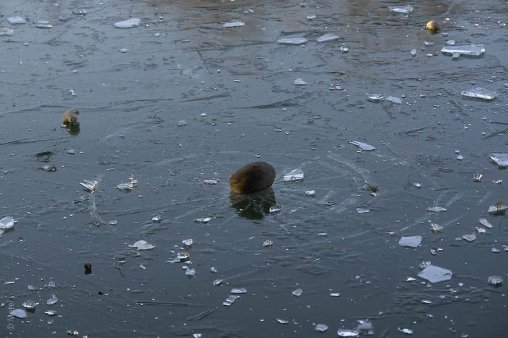 pcamargue-gefroren